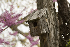 Birdhouse on an old tree Royalty Free Stock Photo