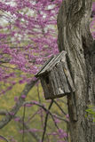 Birdhouse on an old tree Stock Photo