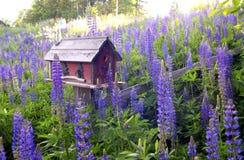 Birdhouse otaczający Lupine obrazy stock