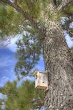Birdhouse in pine tree Stock Photo