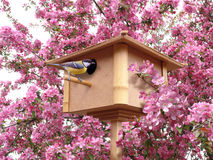 Birdhouse in pink blossoming garden stock photography