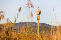 Birdhouse in a post, in the wetlands natural park La Marjal in Pego and Oliva stock images