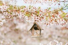 Birdhouse in Spring with blossom cherry flower sakura Stock Image