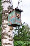 Birdhouse su un albero di betulla Immagine Stock