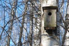 Birdhouse su un albero di betulla Fotografie Stock Libere da Diritti