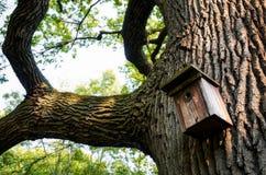 Birdhouse sur un arbre Photographie stock libre de droits