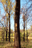 Birdhouse. Take care of the forest and birds. The environmental issue Stock Photos
