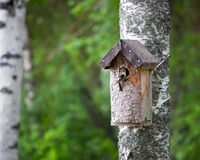 Birdhouse and tiny bird Stock Photo