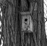 Birdhouse in a tree Stock Photo