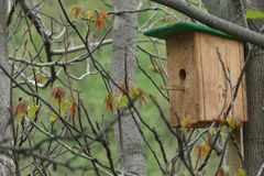 Birdhouse on tree for birds Royalty Free Stock Photography