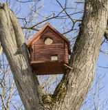 Birdhouse between tree branches Stock Photos