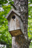 Birdhouse. On a tree in the forest Stock Image