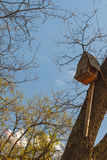 Birdhouse on a tree in forest Park stock photography