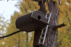 Birdhouse on a tree in forest Park , hand wood shelter for birds to spend the winter stock photo