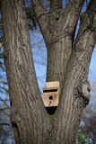 Birdhouse on a Tree Royalty Free Stock Photography