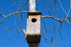 Birdhouse on the tree. Stock Images
