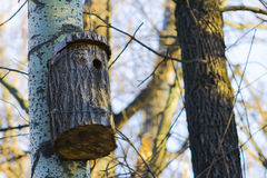 Birdhouse on a tree, nature forest. Horizontal shot, topic - the life of birds Stock Image