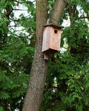 Birdhouse on tree Royalty Free Stock Images
