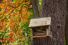 Birdhouse on a tree in park. Wooden birdhouse on a tree in autumn park and bird sitting on a tree Stock Image