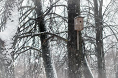 Birdhouse in tree in snow winter Stock Photo