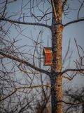 Birdhouse on the tree waiting for the starlings, on the eve of spring in the forest royalty free stock photos