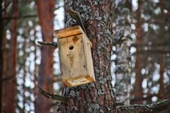 Birdhouse on the tree waiting for the starlings, on the eve of spring in the forest royalty free stock photo