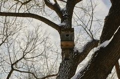 Birdhouse in a tree. In winter city park Royalty Free Stock Images