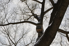 Birdhouse in a tree. In winter city park Royalty Free Stock Photography