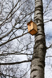 Birdhouse on the trunk of a birch Royalty Free Stock Photography