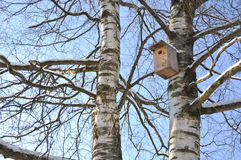 Birdhouse on the trunk of a birch Stock Photography