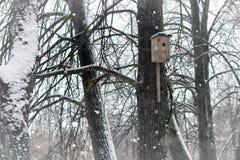 Birdhouse w drzewie w śnieżnej zimie Zdjęcie Stock