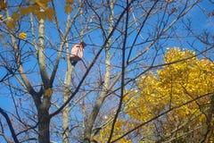 Birdhouse w jesień lesie Fotografia Stock