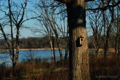 Birdhouse w lesie Obrazy Royalty Free