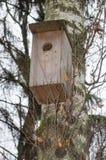 Birdhouse w wiośnie na brzozie w wiośnie obraz stock