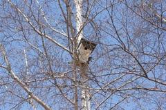 Birdhouse on a white birch tree Stock Photos