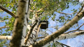 Birdhouse on a white birch tree over clear blue summer sky. On a windy day stock video footage