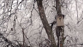 Birdhouse in Winter Forest stock video