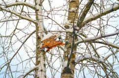 Birdhouse on winter tree stock images