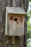 Birdhouse in wood sitting on a tree Stock Photos