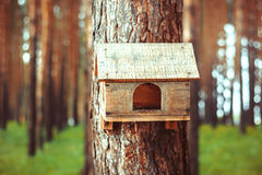 Birdhouse in the woods. Birdhouse in a pine forest in summer green grass Stock Photography