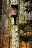 Birdhouses, πουλιά κατοίκισης Στοκ Φωτογραφία