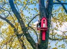 Birdhouses вися на деревьях, лесе стоковая фотография