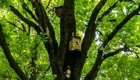 Birdhouses вися на деревьях, лесе стоковые изображения rf