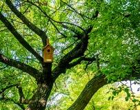 Birdhouses вися на деревьях, лесе стоковая фотография rf
