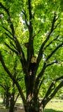 Birdhouses вися на деревьях, лесе стоковое изображение
