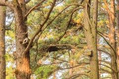 2 birdhouses в деревьях с зелеными листьями Стоковое Изображение RF