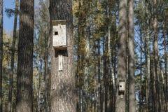 Birdhouses в лесе стоковые фотографии rf