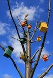 Birdhouses в мертвом дереве стоковая фотография rf