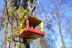 Birdhouses крупного плана на дереве на парке города весной стоковые фотографии rf