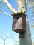 birdhouses на дереве тополя стоковые изображения rf
